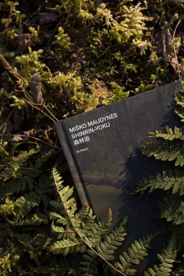 knyga miško gaudynės paslėpta tarp paparčių lapų miške